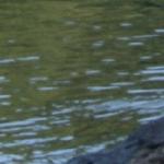 waterbg