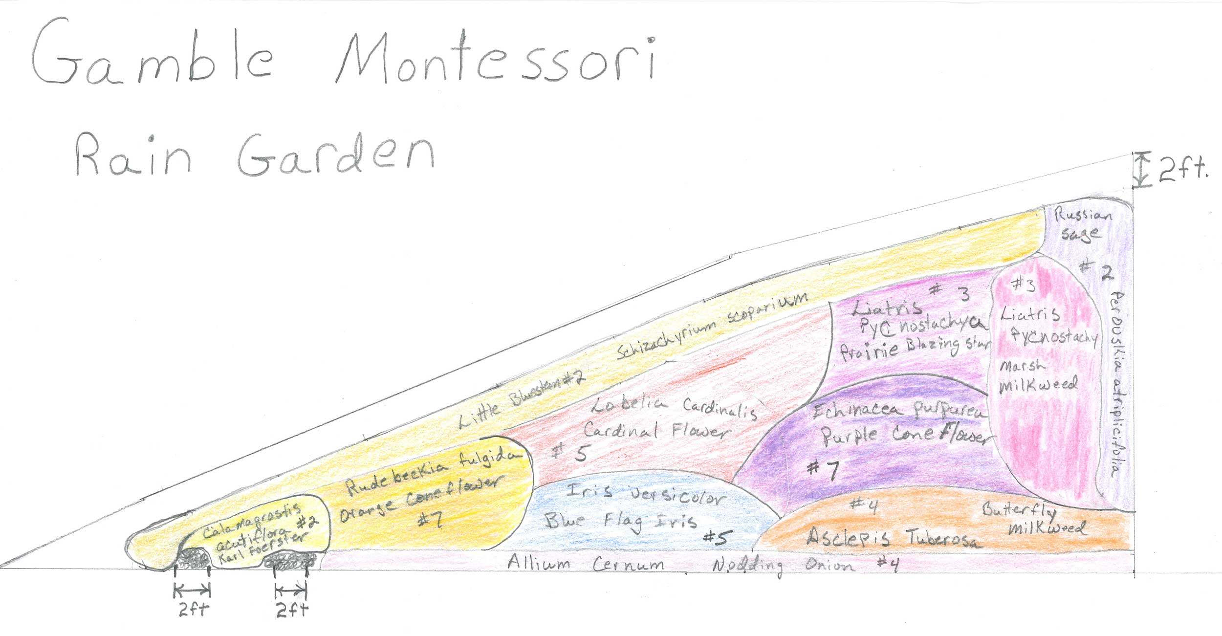 A sketch of the plans for the rain garden layout